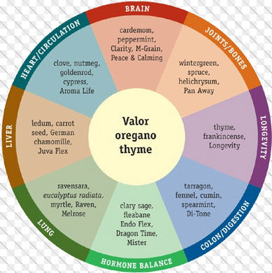Body Systems Oil Wheel Chart