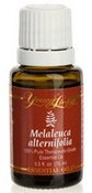 Tea Tree Essential Oil, Melaleuca Alternifolia