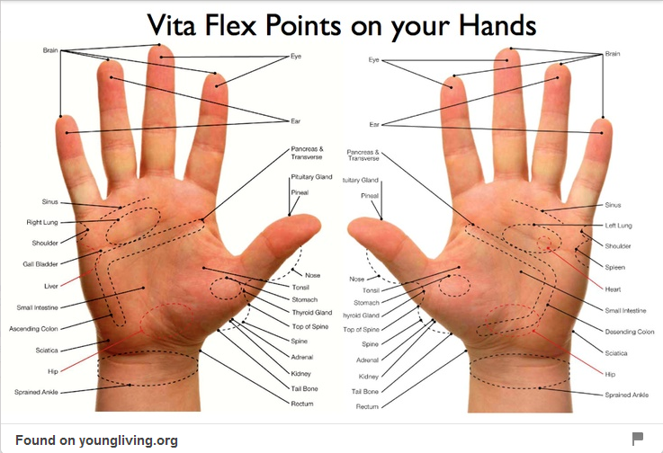 foot reflexology chart pdf  Vita Flex